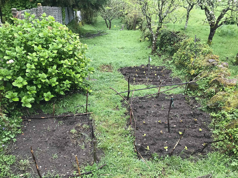 Artan's son's garden.